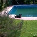 Se me perdio perra labradora negra, de 3 años y medio, mansa en la zona de Guido Spano y Sdor. Moron